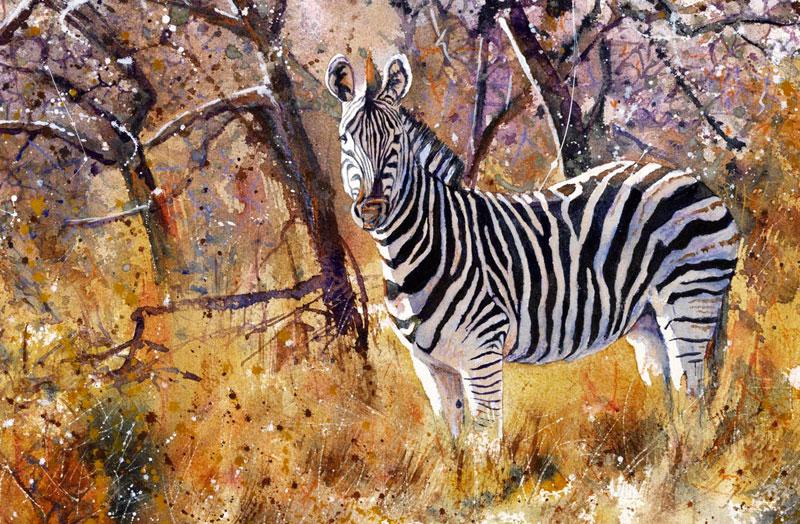 Watercolour Paintings